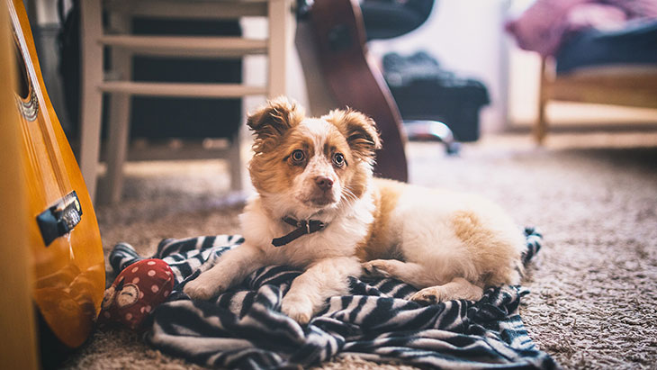 Remove Odor from Smoke, Pets and Mold